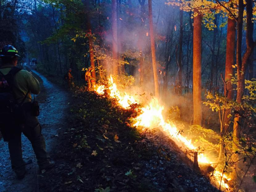 Members of the Arroyo Grande Interagency Hotshot Crew use a drip torch to ignite a burn out operation along Highway 129 and the Cheoah River on Sunday, Nov. 13. Photo by Chris Colt